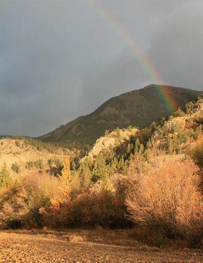 Rainbow_7029